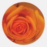 Naranja colorized subió contra fondo anaranjado etiquetas redondas