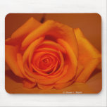 Naranja colorized subió contra fondo anaranjado tapetes de ratón