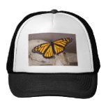 naranja de la mariposa con alas gorra