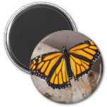 naranja de la mariposa con alas imán