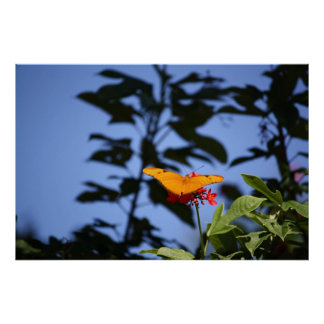 Naranja de la mariposa poster