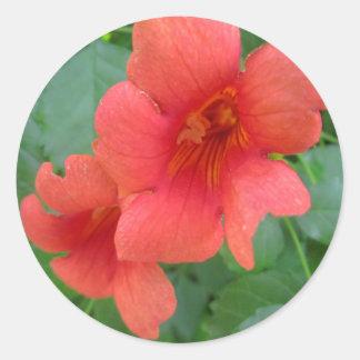 Naranja de la vid de trompeta pegatina redonda