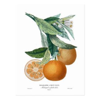 Naranja de Pedro - Antoine Poiteau Tarjetas Postales