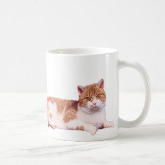Naranja del gato y taza del blanco
