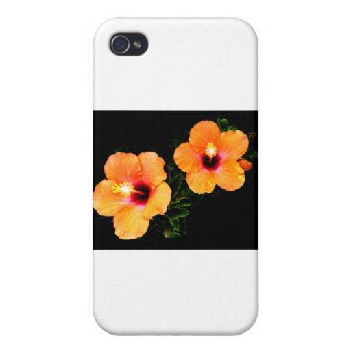 Naranja del hibisco los regalos de Zazzle del MUSE iPhone 4/4S Funda