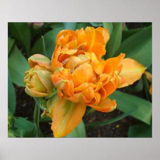 Naranja exquisito y poster doble verde del tulipán
