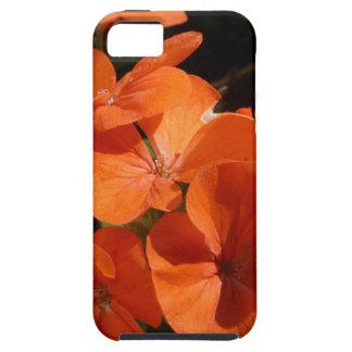 Naranja iPhone 5 Fundas