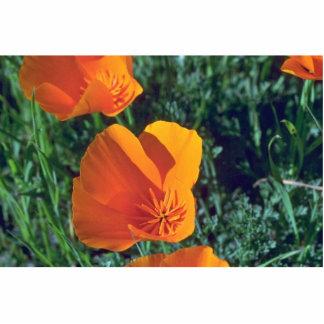 Naranja llameante escultura fotografica