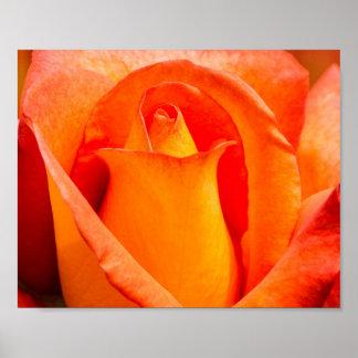 Naranja macro y rosa amarillo póster