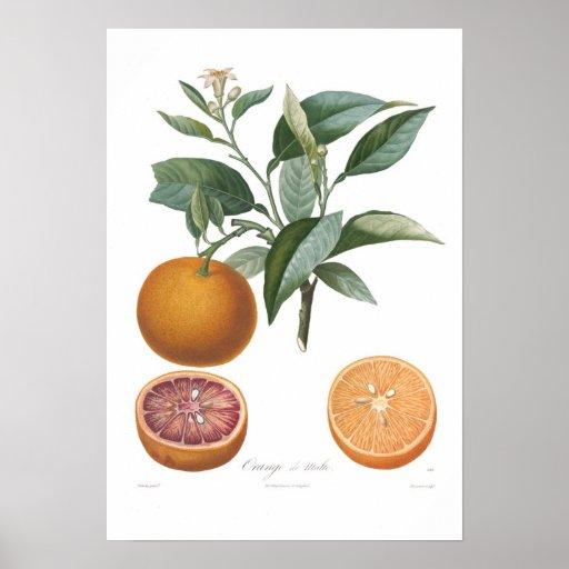 Naranja, Orange de Malte Impresiones