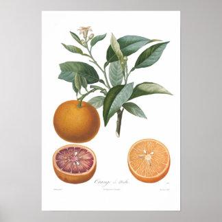 Naranja, Orange de Malte Póster