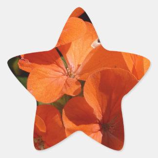 Naranja Pegatina En Forma De Estrella