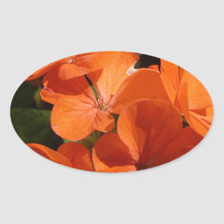 Naranja Pegatina Ovalada
