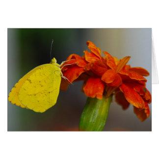 Naranja soñoliento tarjeta de felicitación