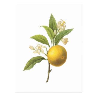 naranja (SP de la fruta cítrica.) por Redouté Tarjeta Postal