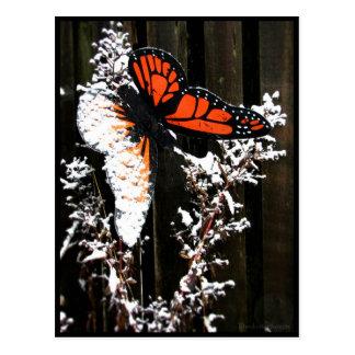 Naranja y nieve postales