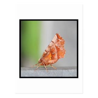 Naranja y polilla de Brown Tarjeta Postal
