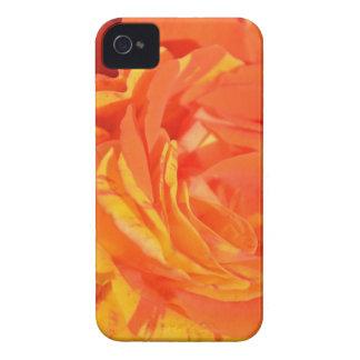 Naranjas caso del iPhone del pétalo color de rosa iPhone 4 Case-Mate Protectores