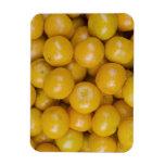 Naranjas de Ponkan Imanes Rectangulares