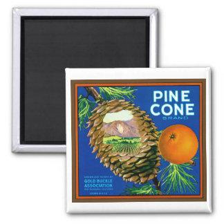 Naranjas del cono del pino imán cuadrado