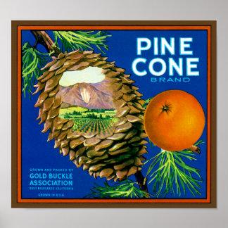 Naranjas del cono del pino póster