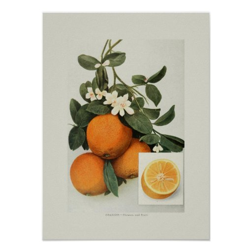 Naranjas Impresiones