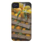 naranjas recientemente escogidos iPhone 4 cobertura