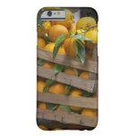 naranjas recientemente escogidos funda de iPhone 6 barely there