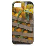 naranjas recientemente escogidos iPhone 5 Case-Mate cárcasas