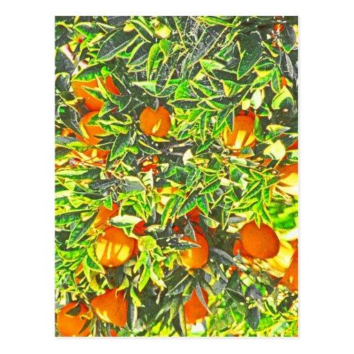 Naranjas y hojas (2) postal