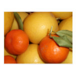 Naranjas y limones tarjetas postales