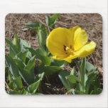 Narciso amarillo abierto alfombrillas de ratón