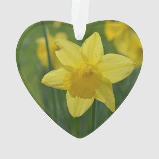 Narciso amarillo bonito
