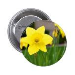 Narciso amarillo de la Placer-Primavera Pins