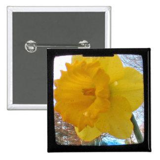 Narciso amarillo de la primavera pin