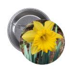Narciso amarillo de la primavera pins