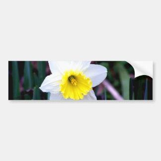 Narciso blanco y amarillo pegatina para auto