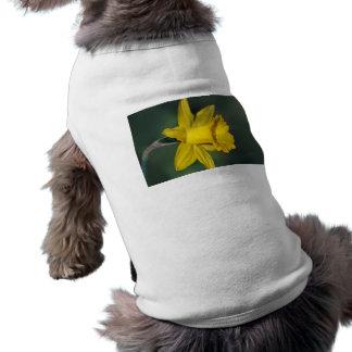 Narciso brillante y su significado playera sin mangas para perro