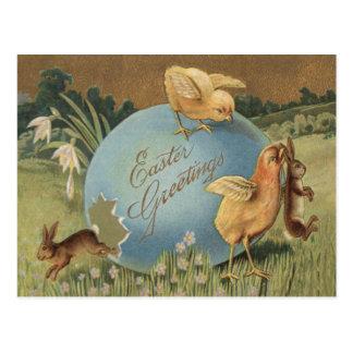 Narciso coloreado polluelo del lirio del huevo del postales