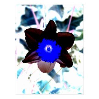 Narciso de la negativa de la foto tarjeta postal
