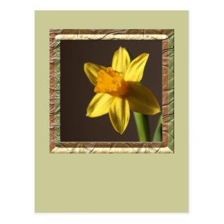 Narciso de la primavera postales