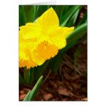Narciso de Pascua Tarjeton