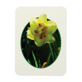 Narciso doble amarillo rectangle magnet