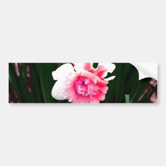 Narciso doble del rosa y blanco pegatina para auto
