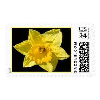 Narciso floral de marzo del franqueo del mes del sello