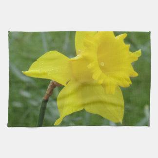 Narciso Galés en la floración Toallas De Mano