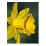 Narciso y su significado postal