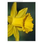 Narciso y su significado tarjeta de felicitación