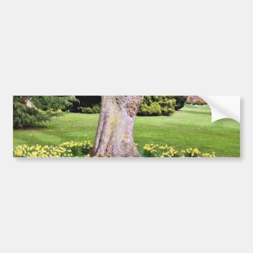 Narcisos alrededor del árbol en el parque etiqueta de parachoque