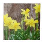 Narcisos amarillos brillantes azulejo